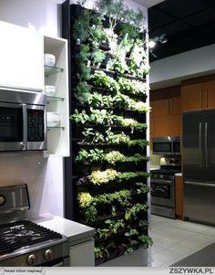 Hermoso jardin con hierbas para cocinar, en tu propia cocina