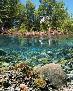 http://plazilla.com/page/4295161293/mangroven-en-koraalriffen