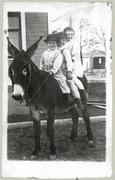 Three on a donkey (enhanced version).     Courtesy: anyjazz65, Oklahoma (USA).