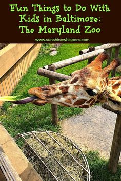 Fun Things to Do With Kids in Baltimore: The Maryland Zoo - Sunshine Whispers  http://www.sunshinewhispers.com/2015/09/fun-things-to-do-with-kids-in-baltimore-the-maryland-zoo/