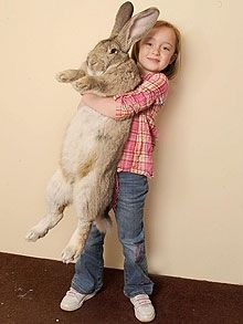 Little girl with a Welsh Giant rabbit. Also called Flemish Giant. I want a giant bunny!!