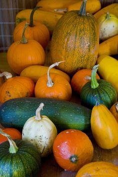 Pumpkins   da sunicka
