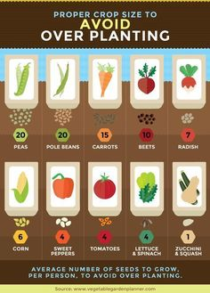avoid over planting #OrganicGardening