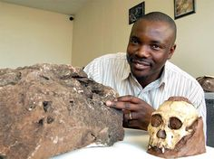 """Tooth protruding from rock leads researchers to hominin remains. A CT scan performed on a...rock at the [Univ] of Witwatersrand has revealed that it contains parts of an early hominid...[A protruding] prehistoric tooth...tipped off researchers to hidden evolutionary treasure: remarkably complete human-ancestor fossils trapped in a rock that had been sitting in their lab for years. Scans...[showed 2M]-year-old fossils that will 'almost certainly' make one Australopithecus sediba specimen."""
