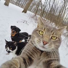 Check out these hilarious pictures of animals that have mastered capturing perfect selfies. Can they take better selfies than you? Like Animals, Animals And Pets, Funny Animals, Funny Animal Pictures, Cute Pictures, I Love Cats, Cute Cats, Mundo Animal, Animals Beautiful