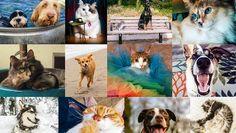 Las mascotas influyen en el comportamiento de los usuarios en Facebook http://ww.abc.es/6ZgY3036fD6
