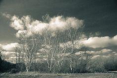 Four Birch Trees Lake La Su An by Mitch Labuda