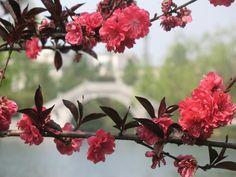 hangzhou Hangzhou, Go Outside, Four Seasons, Beautiful Flowers, Travel Destinations, Places, Nature, Photos, Road Trip Destinations