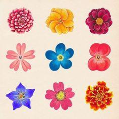 꽃 일러스트 - Google 검색