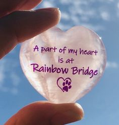 Just Over the Rainbow Bridge Dog Best Friend Quotes, Dog Quotes, Pet Loss Grief, Pet Remembrance, Rose Quartz Heart, Sympathy Gifts, Rainbow Bridge, Over The Rainbow, Beautiful Roses