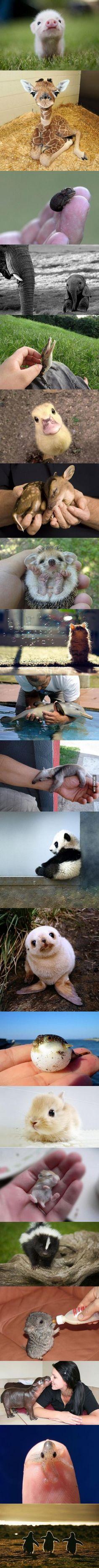 Is it sad I find baby animals cuter than human babies....?