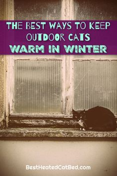 As the seasons change and temperatures drop, you are probably wondering how to keep your cat warm in winter. You are right to worry about your cat and wintery weather – and there are several ways to make sure your cat stays comfortable when it gets cold. We have rounded up the best tips for how to keep cats warm in winter so that you can rest assured that your feline friends are cozy. Heated Cat House, Heated Outdoor Cat House, Outdoor Cat Shelter, Heated Cat Bed, Outdoor Cats, Cat Window Hammock, Heating Pads, Cat Sweaters, Cat Beds