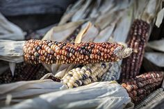 Corn of Many Colors by Caitlyn Grasso. A pile of colorful corn shines in the sun at Avila Valley Barn in Avila, California!