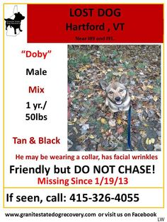 LOST DOG, DOBY, HARTFORD VERMONT