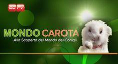 CGTV - Nasce una rubrica sui piccoli amici conigli Mondo Carota,