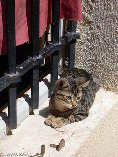 Marseille kitty