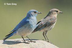 Wildlife-Backyard Birds