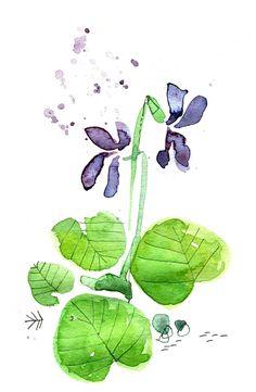 violettes aquarelle, cécile hudrisier