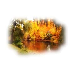 Tubes paysages automne ❤ liked on Polyvore featuring autumn, fall, landscape, paysage and trees