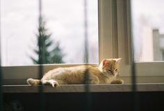 ant mackiewicz #lomo #photo #komwiz #ginger #cat