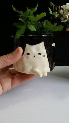 Cat Pot Plant