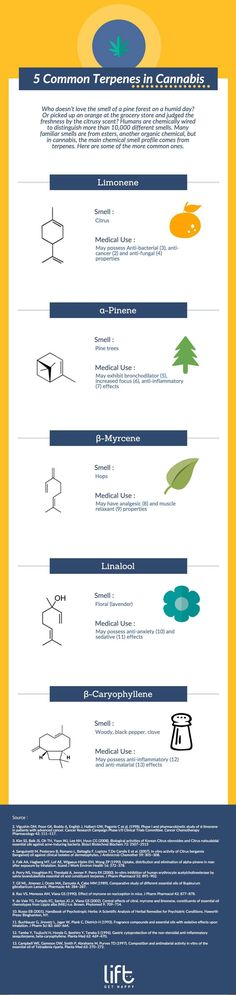 5 Common Terpenes in Cannabis: June 4 Infographic – Oregon Cannabis Connection