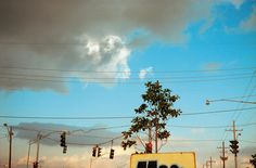 William Eggleston The Democratic Forest