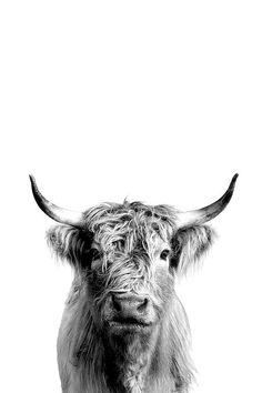 Black and white photography inspiration: contrast shows beauty: photo, . - Black and White Photography Inspiration: Contrast Shows Beauty: Photo, # - Amazing Animals, Animals Beautiful, Cute Animals, Scottish Highland Cow, Highland Cattle, Highland Cow Art, Highland Cow Tattoo, Black White Photos, Black And White Photography
