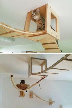Instalado no teto e nas paredes da sala de estar, este sistema de pontes, apoios e prateleiras virou um verdadeiro paraíso felino