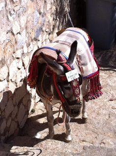 El típico burro-taxi de Mijas (Málaga) / A typical donkey-taxi from Mijas (Málaga), by @jmortegaMLG