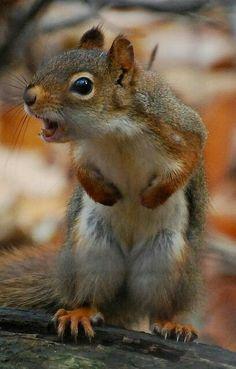 Yous crowz goes away, deez MY peanutz!
