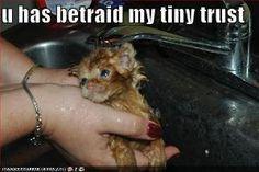 . . . warum, zum Henker, badet man eigentlich eine Katze???