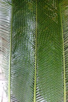 palm braiding for palm sunday Flax Weaving, Weaving Art, Basket Weaving, Palm Frond Art, Palm Fronds, Housewarming Decorations, Coconut Leaves, Ganapati Decoration, Leaf Crafts