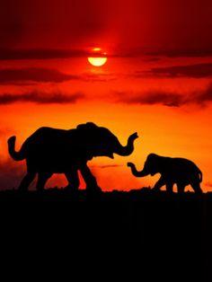 elephants in autumn -