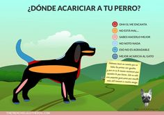 All About Animals, Animals And Pets, Cute Animals, Mundo Animal, My Animal, Rottweiler, Golden Retriever, Pet Life, Little Dogs