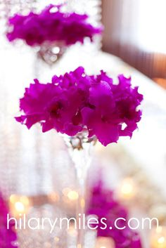 Magenta Cattleya Orchids Magenta Flowers, Cattleya Orchid, Bright Pink, Orchids, Centerpieces, Delicate, Sorority, Omega, Inspiration
