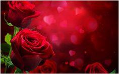 Beautiful Roses Love Wallpaper | beautiful love rose hd wallpaper, beautiful rose love wallpaper