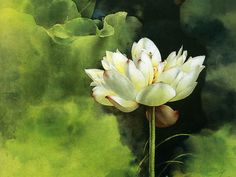 watercolor flower images   brush painting water lily « flower pictures