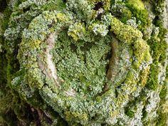 Natuurlijk hart bedekt met mos. Van fotograaf Wieman.
