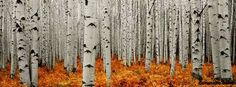 Image result for facebook covers fall