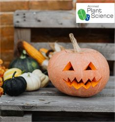 7 pumpkin facts you didn't know – Plant Science by Atrimed Halloween Decorations, Halloween Party, Halloween Ideas, Pumpkin Facts, Creative Pumpkins, Plant Science, Food Facts, Pumpkin Decorating, Pumpkin Carving