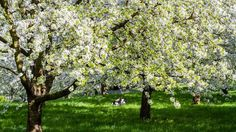 Chcete vedieť, ako sa správne režú ovocné stromy? Poradíme vám!