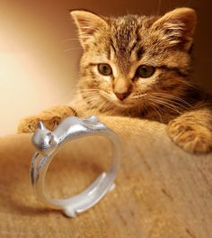 925 Sterling Silver Cat Ring Cute kitty opening ring for ladies bague femme 2015 Sterling Silver Jewellery Wholesale anel feminino - Silver Jewellery 925 - SHOP NOW