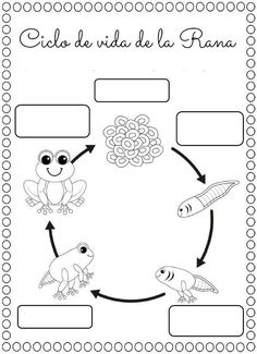 Frog Life Cycle For Kids Worksheets 1st Grade Science, Kindergarten Science, Kindergarten Worksheets, Teaching Science, Science For Kids, Kids Worksheets, Frogs Preschool, Frog Coloring Pages, Coloring Sheets