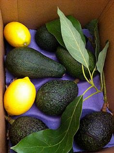 All kinds of rare avocados from California.