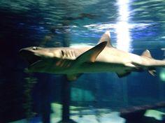 Seb baek sempat nyorok.. #shark