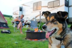Are you planning a rustic getaway? It's time to schedule a dog-friendly camping trip! If you want to camp out and experience nature with your furry pal, check out this list of dog-friendly camping tips to make it your most successful trip ever. Border Collie Mix Puppies, Border Collies, Puppies For Sale, Dogs And Puppies, Road Trip With Dog, Camper, Best Campgrounds, Dog List, The Perfect Dog