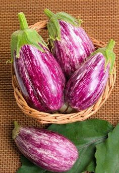 'Rosa Bianca' Eggplant is one of the most beautiful Heirloom Vegetables. They are easy to grow, but I don't usually get too many fruits per plants.