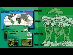 (4) Layers of a Rainforest | EasyTeaching - YouTube Animal Habitats, Rainforests, Forest Floor, Amazing Places, Layers, Africa, Make It Yourself, Science, Animals