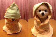 Yoda before he got old and wrinkly and his cloak grew moldy... he was a cute little guy in the early days...